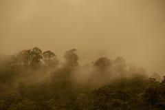 Tropical rainforest in  Hala-Bala Wildlife Sanctuary of Thailand. Nature background Royalty Free Stock Photography