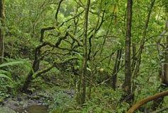 Tropical Rainforest in Hawaii Stock Photo
