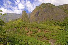 Tropical Rainforest in Hawaii Royalty Free Stock Photos