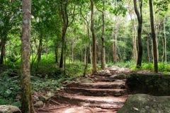 Tropical rainforest in huai yang national park. At prachuap khiri khan, thailand stock photography