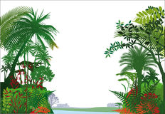 Tropical rainforest. Illustrated scenic view of a tropical rainforest and river with a white background Stock Photos