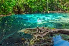 Tropical rainforest - jungle Stock Photos