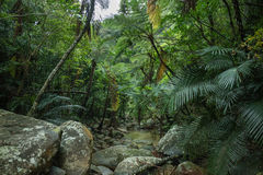 Tropical rainforest jungle, Ishigaki Island, Okinawa, Japan. Jungle stream with tree fern canopy in tropical rainforest, Ishigaki Iriomote National Park of the Stock Photo