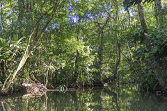 Tropical Rainforest Lagoon Stock Photography