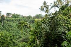 Tropical Rainforest Landscape, Bali island, Indonesia. royalty free stock photos