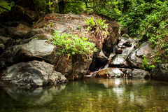 Tropical rainforest landscape with beautiful lake Royalty Free Stock Photo