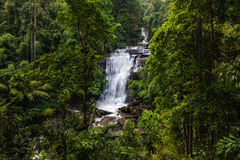 Tropical rainforest landscape with beautiful waterfall Royalty Free Stock Photography