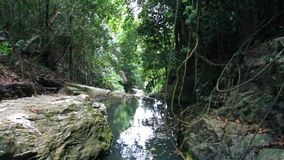 Tropical rainforest landscape with beautiful. Waterfall, rocks and jungle plants. Koh Samui. Thailand. 1920x1080 stock footage