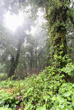 Tropical Rainforest Royalty Free Stock Image