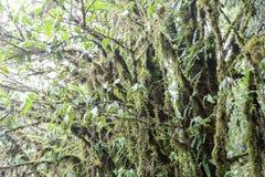 Tropical Rainforest Stock Photos