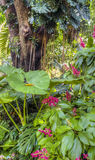 Tropical rainforest Royalty Free Stock Images