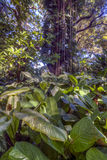 Tropical rainforest Stock Photography