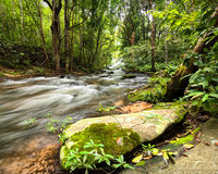 Tropical rainforest landscape with flowing river, rocks and jung Royalty Free Stock Photos