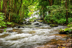 Tropical rainforest landscape with flowing river. Thailand Stock Image