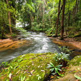 Tropical rainforest landscape with flowing river. Thailand Royalty Free Stock Images