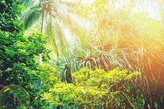 Tropical Rainforest Landscape, Malaysia, Asia. Royalty Free Stock Images