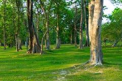 Tropical Rainforest Landscape Stock Images