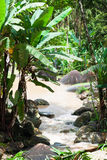 Tropical rainforest in Langkawi Island Royalty Free Stock Photos