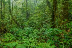 Tropical forest in the mist. Tropical rainforest in the mist at doi inthanon national park, Thailand Royalty Free Stock Image