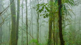 Tropical forest in the mist. Tropical rainforest in the mist at doi inthanon national park, Thailand Royalty Free Stock Photos