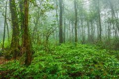 Tropical forest in the mist. Tropical rainforest in the mist at doi inthanon national park, Thailand Stock Photos
