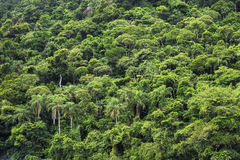 Tropical Rainforest, Nature Background Stock Photography