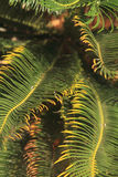 Tropical rainforest palm leaf. Leaves of palm tree, nature background Stock Images