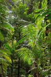 Tropical rainforest with plants Stock Images