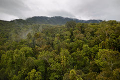Tropical Rainforest in Queensland. A picture of an Australian rainforest in northern queensland near Kuranda on a rainy day Royalty Free Stock Photography