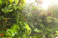 Tropical rainforest rain water. Heavy planted wet tropical rainforest Royalty Free Stock Photo