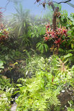Tropical rainforest rain water Stock Photos