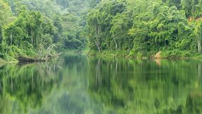 Tropical Rainforest with reflex in the water Beautiful scenery nature background stock image