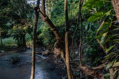 Tropical rainforest and river, Rain Forest Jungle. stock photos