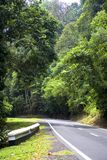 Tropical Rainforest Road royalty free stock photos