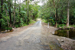 Tropical rainforest road. Old road through tropical rainforest with a creek Stock Photography