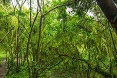 Tropical rainforest on Santa Cruz Island. On the Galapagos in Ecuador Stock Photography