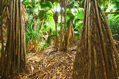 Tropical rainforest at Seychelles stock photo