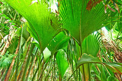 Tropical rainforest at Seychelles Royalty Free Stock Photo