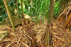 Tropical rainforest at Seychelles. Valle de Mai, Praslin royalty free stock image