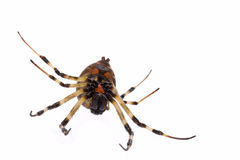 Tropical rainforest spider Stock Photos