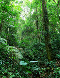 Tropical rainforest Royalty Free Stock Photography