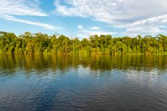 Tropical Rainforest at Sunset, Tortuguero, Costa Rica. Landscape of the tropical rainforest in Tortuguero at sunset along the Tortuguero river in Costa Rica stock photography