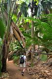 Trekking in jungle, Seychelles, Valle de Mai. A tropical rainforest. Tourist walking on a path in the jungle Valle de Mai stock photos