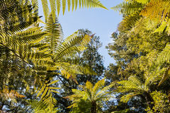 Tropical rainforest tree canopy against blue sky Stock Photography