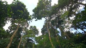 Tropical rainforest tree tops. Video of tropical rainforest tree tops stock video