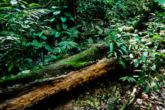 Tropical Rainforest Stock Image