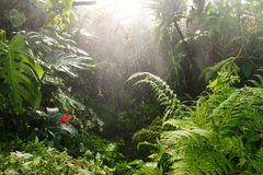 tropical rainforest water greenhouse Stock Photos