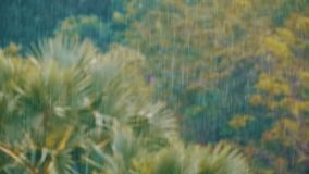 Tropical Rainstorm in the Jungle against the backdrop of a Green Forest with a Palm Tree. Slow Motion. In 96 fps. Tropical wind and rain drops falling on the stock video