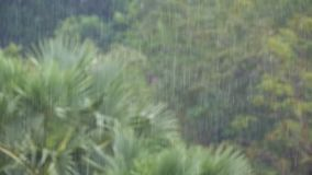 Tropical Rainstorm in the Jungle against the backdrop of a Green Forest with a Palm Tree. Slow Motion. In 96 fps. Tropical wind and rain drops falling on the stock footage