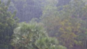 Tropical Rainstorm in the Jungle against the backdrop of a Green Forest with a Palm Tree. Tropical wind and rain drops falling on the green palm tree leaves stock video footage